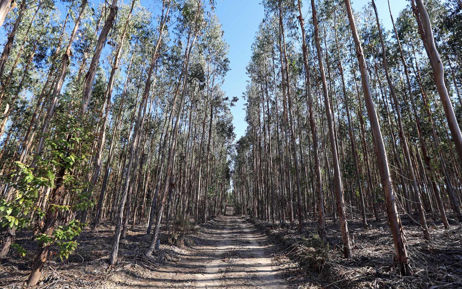 A fábrica da Altriflorestal é a floresta
